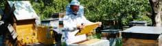 Блог о пчеловодстве