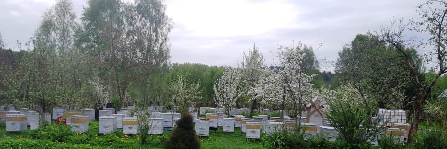 Моя пасека весной