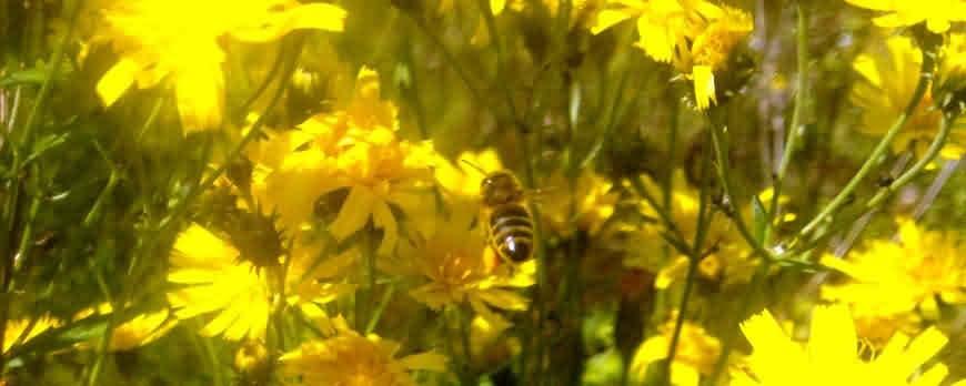 Призыв к применению природных процессов в повседневном пчеловодстве