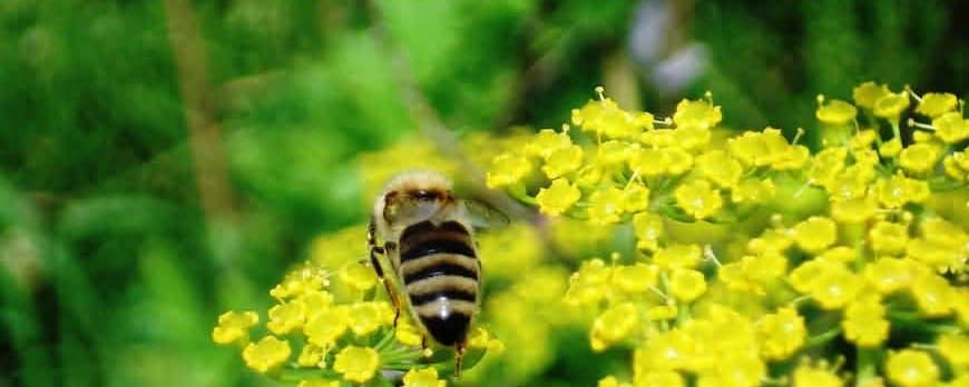 Когда на земле исчезнут пчелы...